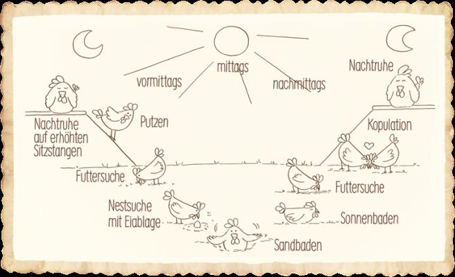 Tagesablauf Bio-Hühner